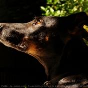 Toutes les photos de chiens