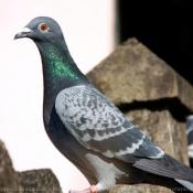 Les fonds d'écran Oiseaux de kaki