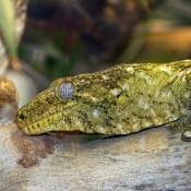 Fond d'écran avec photo de Gecko