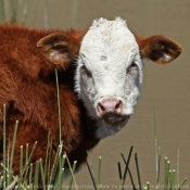 Toutes les photos d'animaux de la ferme