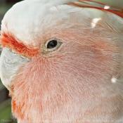 Toutes les photos d'oiseaux