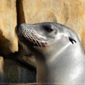 Les fonds d'écran Animaux aquatiques de elocas1