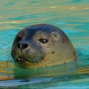 Les fonds d'écran Animaux aquatiques de snourse