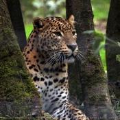 Photo de Jaguar