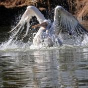 Les fonds d'écran Oiseaux de allenaid