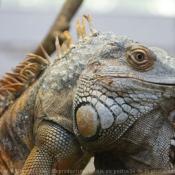 Les fonds d'écran Reptiles de flomejo