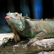 Les fonds d'écran Reptiles de home77