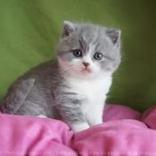 Toutes les photos de chats