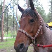 Photo de Mustang