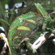 Les fonds d'écran Reptiles de biquette99