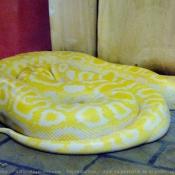 Photo de Python