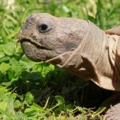 Les fonds d'écran Reptiles de djanzimiou