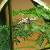 Les fonds d'écran Reptiles de youkaii