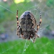 Fond d'écran avec photo d'Araignée