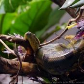 Photo d'Anaconda