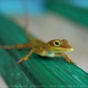Les fonds d'écran Reptiles de enoiamare