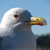 Les fonds d'écran Oiseaux de biquette99