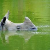Fond d'écran avec photo de Rhinocéros