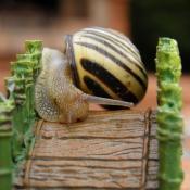 Fond d'écran avec photo d'Escargot