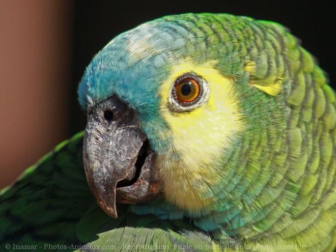 Photo d'Amazone