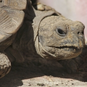Toutes les photos de reptiles