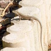 Les fonds d'écran Reptiles de chacqueline