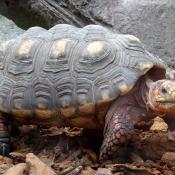 Les fonds d'écran Reptiles de verolivier