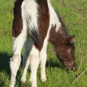 Toutes les photos de chevaux