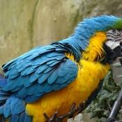 Les fonds d'écran Oiseaux de verolivier