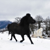 Photo de Poney (toutes races)