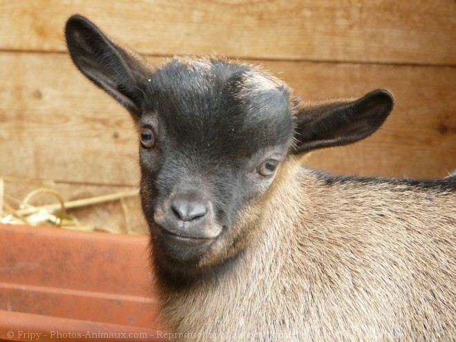 Photo de Chevreau