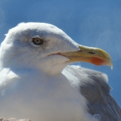 Les fonds d'écran Oiseaux de glyca