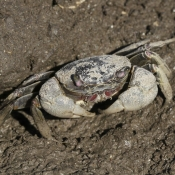 Photo de Crabe