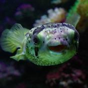 Toutes les photos d'animaux aquatiques