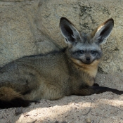 Photo de Ne sais pas
