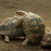 Les fonds d'écran Reptiles de ecume