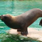 Les fonds d'écran Animaux aquatiques de ecume