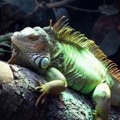 Les fonds d'écran Reptiles de alice15