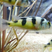 Les fonds d'écran Animaux aquatiques de alice15