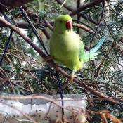 Les fonds d'écran Oiseaux de alice15