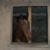 Photo de Holstein